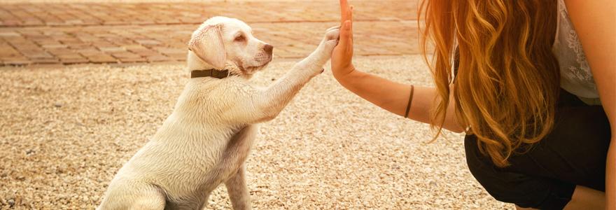 La vidéo formation au service du dressage de chien